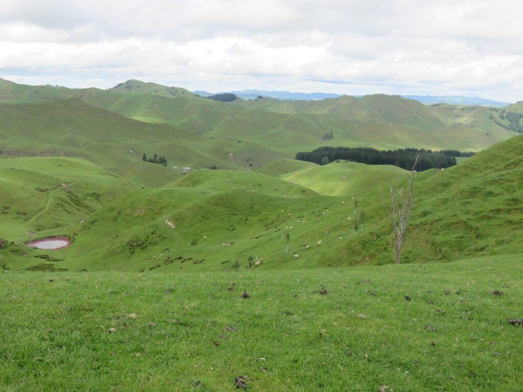 Visite d'une ferme d'élevage de bovins et de quinoa à Taihape, en Nouvelle-Zélande